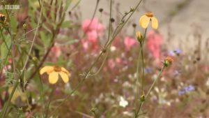 Screenshot from The Beechgrove Garden (episode from Sept 21, 2019, more info here)